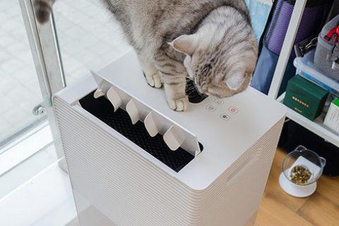 湿度控制你知道多少?浅谈居室环境改善